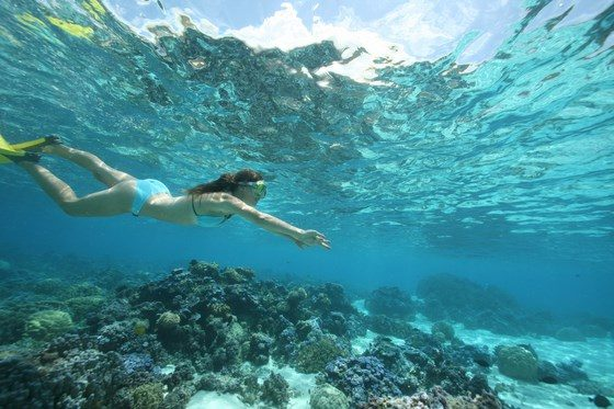 snorkeling in Moorea, French Polynesia